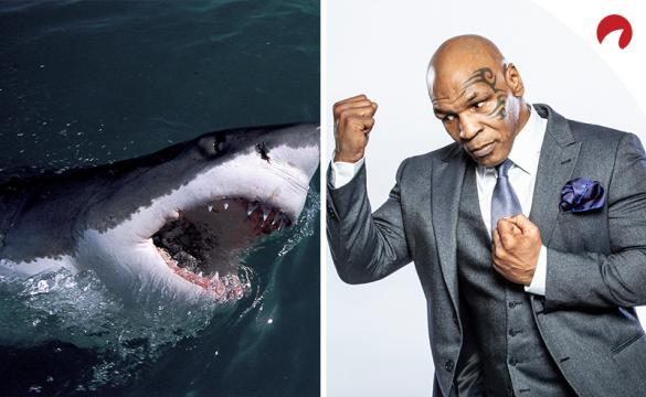 A great white shark in the water next to a picture of Mike Tyson posing in a photo shoot