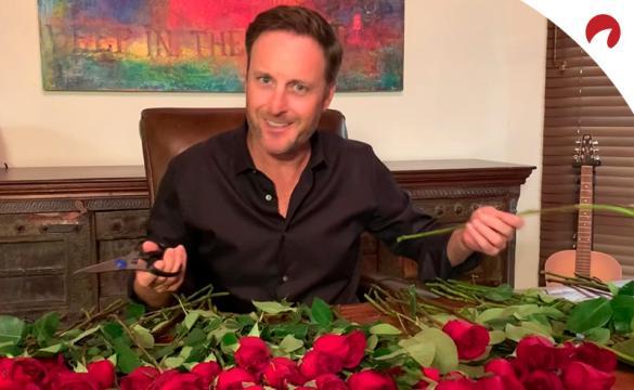 Matt James Bachelor Odds